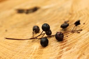 木の実の写真素材 [FYI00150103]