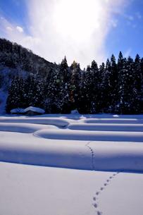 冬の足跡の写真素材 [FYI00150214]