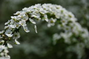 花のアーチの写真素材 [FYI00150229]