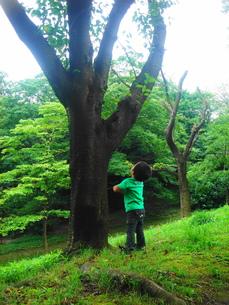 木を見上げる男の子の素材 [FYI00150629]