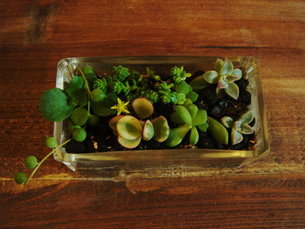 ガラスの器×多肉植物の素材 [FYI00150633]