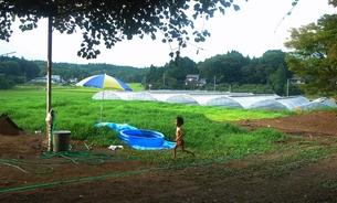 田舎の夏、走る男の子。の素材 [FYI00150637]