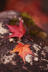 落ち葉の写真素材 [FYI00150729]