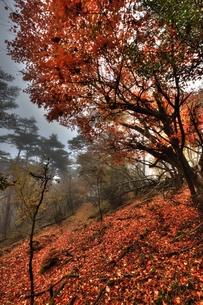 霧の森の写真素材 [FYI00150741]