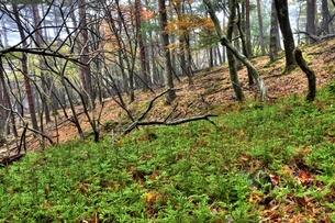 霧の森の写真素材 [FYI00150749]