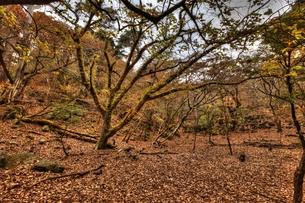 幽玄の森の写真素材 [FYI00150752]