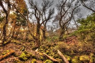 幽玄の森の写真素材 [FYI00150778]
