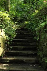 苔むした階段の写真素材 [FYI00150836]