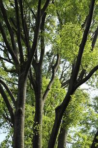 木と新緑の写真素材 [FYI00150842]
