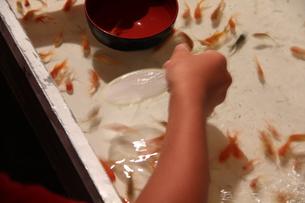 金魚すくいの写真素材 [FYI00150933]