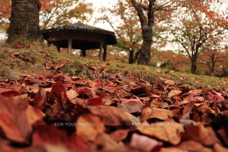 秋の公園の素材 [FYI00150968]