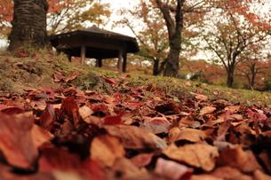 秋の公園の写真素材 [FYI00150968]