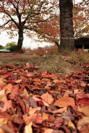 秋の公園の素材 [FYI00150969]