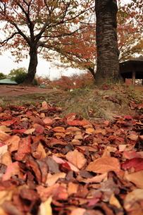 秋の公園の写真素材 [FYI00150969]