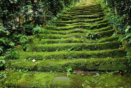 苔生える階段の写真素材 [FYI00151474]