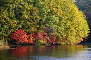 湖面に佇む紅葉の写真素材 [FYI00151501]
