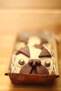 整列するパグ犬のクッキーの素材 [FYI00151882]