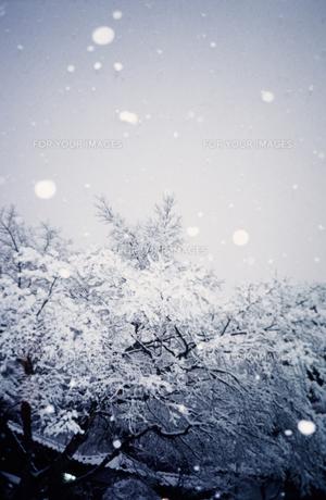 雪の素材 [FYI00152100]
