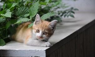 子猫の写真素材 [FYI00152287]