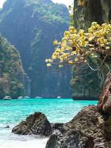 ピピ島の写真素材 [FYI00152471]