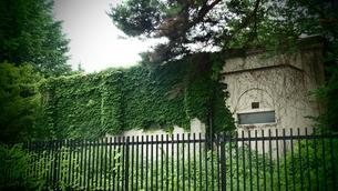 ツルに覆われた建物の写真素材 [FYI00152556]