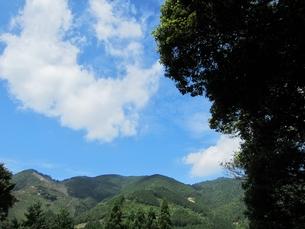 田舎の風景 肉桂の木と空の写真素材 [FYI00152621]