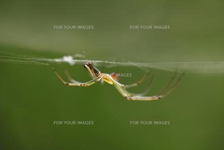 クモの写真素材 [FYI00152659]