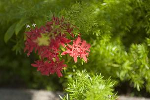 南国の赤い花の写真素材 [FYI00152671]