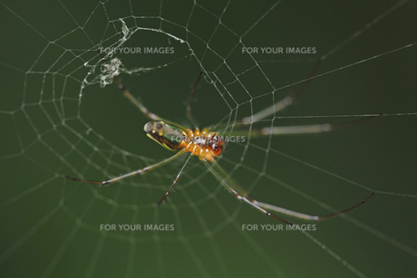 クモの写真素材 [FYI00152672]