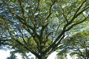 南国の樹の写真素材 [FYI00152678]