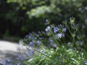 青い花の写真素材 [FYI00152697]