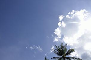 南国の空の写真素材 [FYI00152698]
