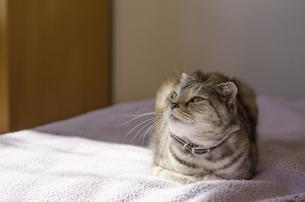 くつろぐ猫の写真素材 [FYI00152706]
