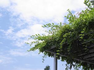 緑と空の写真素材 [FYI00152708]