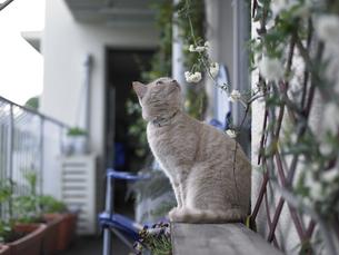 猫と花の写真素材 [FYI00152711]