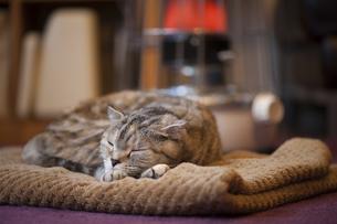 ストーブで暖まる猫の写真素材 [FYI00152713]
