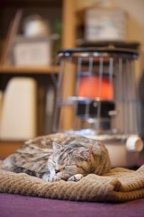 ストーブで暖まる猫の写真素材 [FYI00152722]