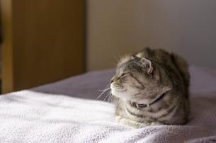 くつろぐ猫の写真素材 [FYI00152723]