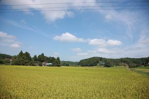 稲の写真素材 [FYI00152737]