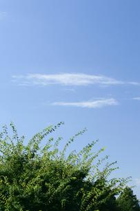 青空の写真素材 [FYI00152775]