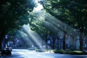 朝の道の写真素材 [FYI00152798]