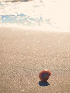 海と貝殻の素材 [FYI00152864]