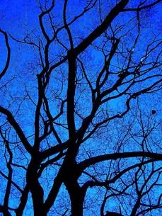 冬の木の素材 [FYI00152872]