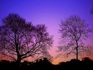 冬の夕刻の素材 [FYI00152884]