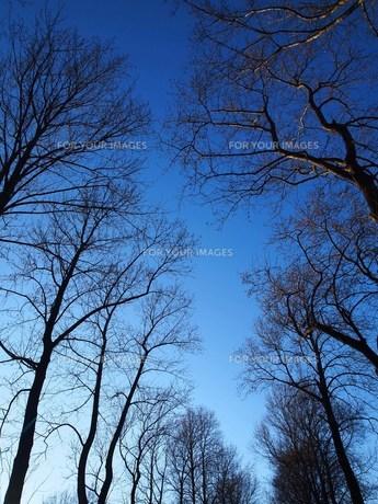 冬の空の素材 [FYI00152905]