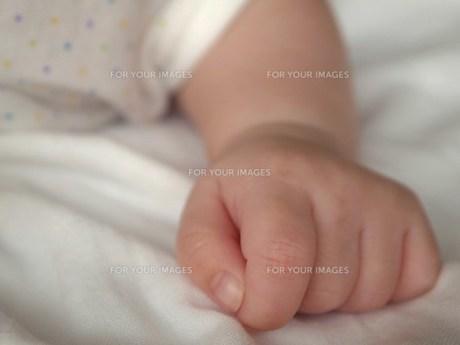 小さな手の素材 [FYI00152909]