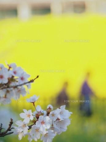 春の散歩の素材 [FYI00152915]