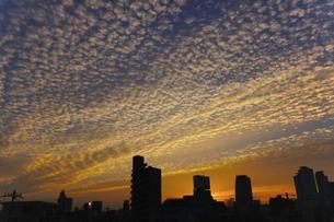 名古屋の夜明けの写真素材 [FYI00153039]