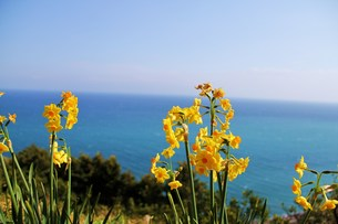 黄色い花の写真素材 [FYI00153290]