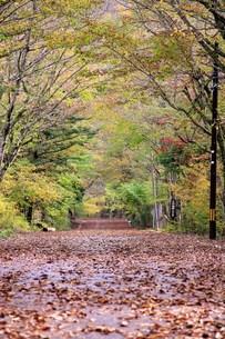 落ち葉の道の写真素材 [FYI00153323]